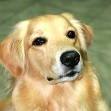 11 Interesting Dog Facts