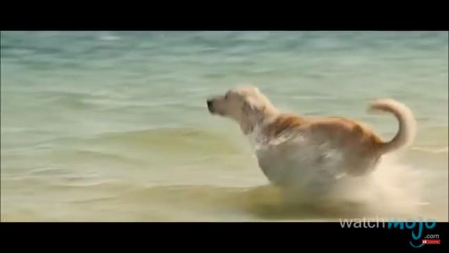 top-10-dog-breeds-labrador