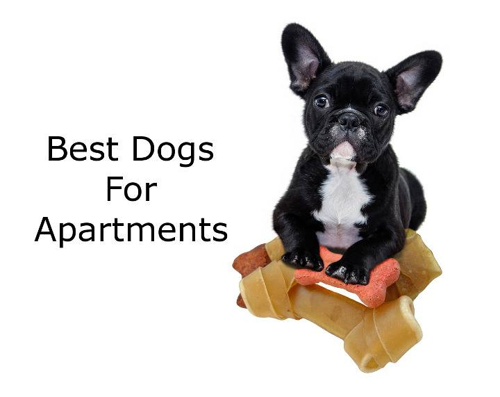 Dogs To Have In An Apartment - Apartment Decorating Ideas