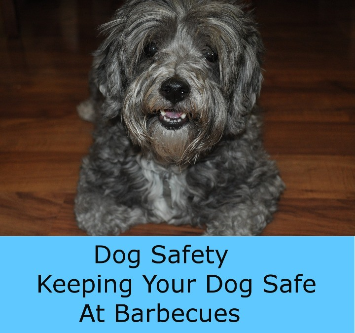 Dog Safety At Barbecues