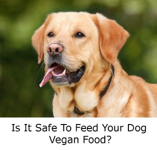 Feeding Your Dog Vegan Food - Is It Healthy For Dogs