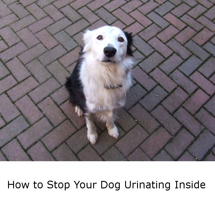 How To Stop Your Dog Urinating Inside