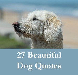 27 Beautiful Dog Quotes - Some Touching, Some Poignant And Some Funny