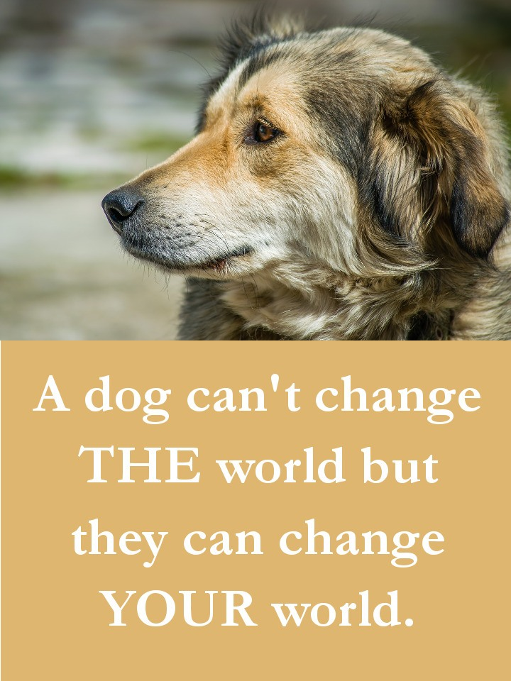 Dog Quotes - A dog can't change THE world but they can change YOUR world.