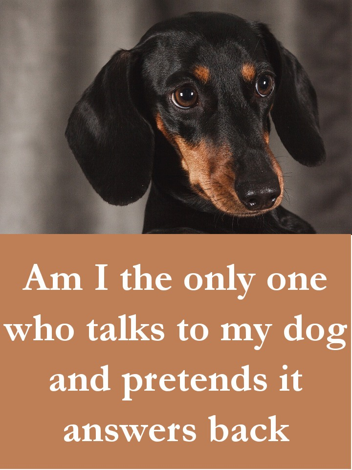 Dog Quotes - Am I the only one who talks to my dog and pretends it answers back
