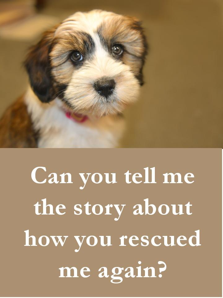 Dog Quotes - Can you tell me the story about how you rescued me again.