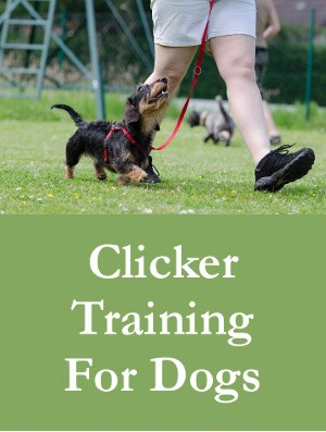 Clicker Training For Dogs - Positive Reinforcement On Steroids