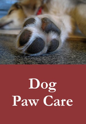 Dog Paw Care – Tips To Keep Your Dog's Paws In Top Condition