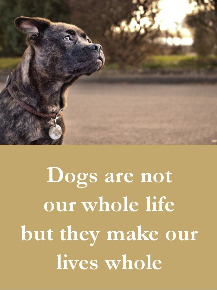 Dog Quotes - Dogs are not our whole life but they make our lives whole