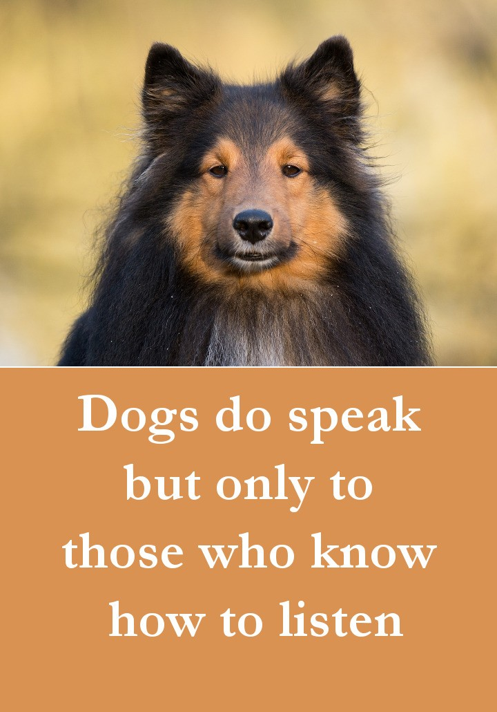 Dog Quotes - Dogs do speak but only to those who know how to listen