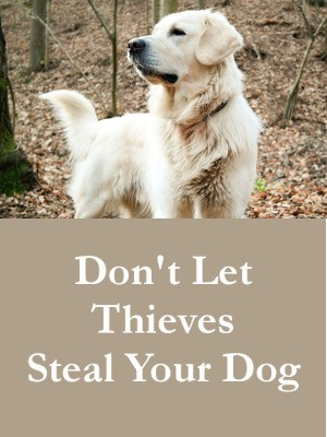 Don't Let Thieves Steal Your Dog