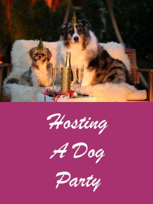 How To Host A Dog Party - Things To Do And Things To Avoid