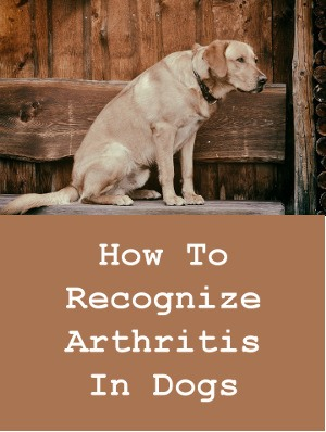 How To Recognize Arthritis in Dogs