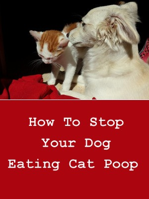 How To Stop Your Dog From Eating Cat Poop