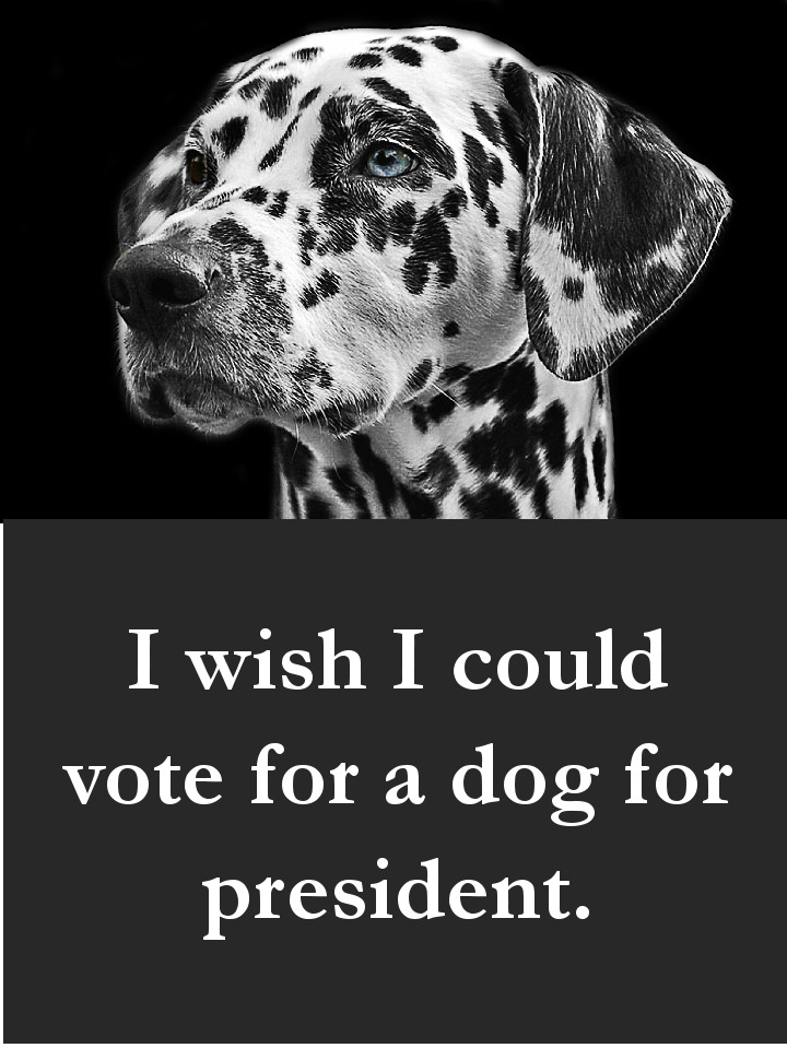 Dog Dog Quotes - I wish I could vote for a dog for president.Quotes