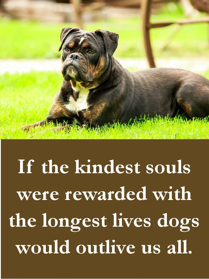 Dog Quotes - If the kindest souls were rewarded with the longest lives dogs would outlive us all.
