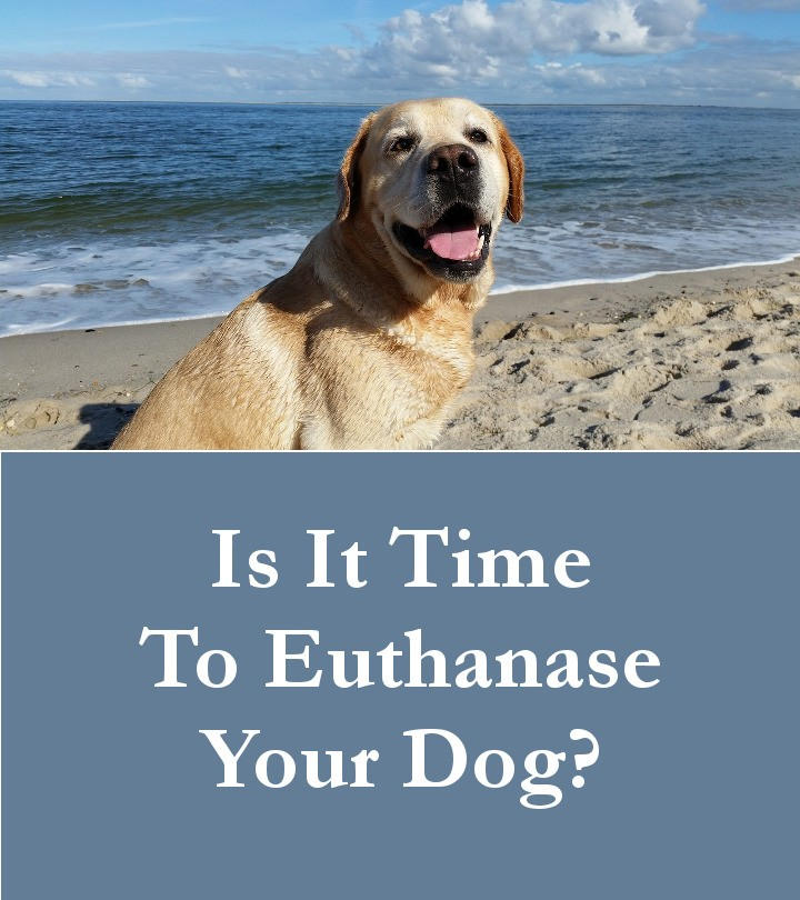 When To Euthanase Your Dog