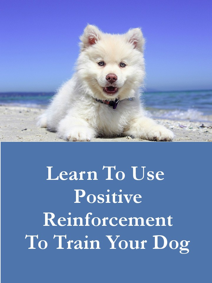Learn To Use Positive Reinforcement to Train Your Dog