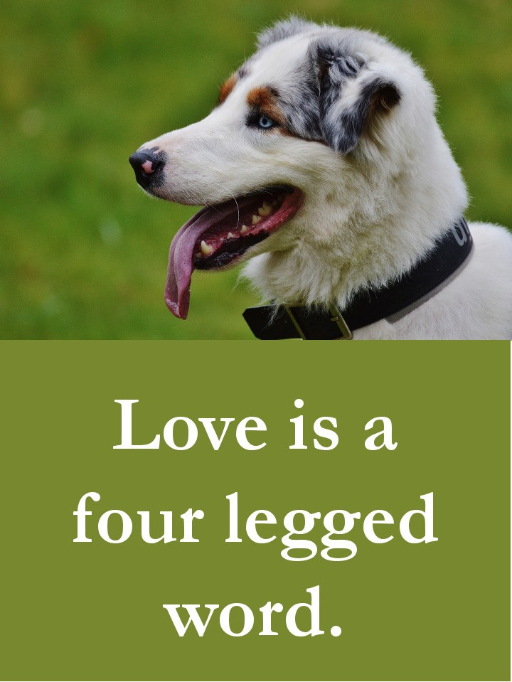 Dog Quotes - Love is a four legged word.