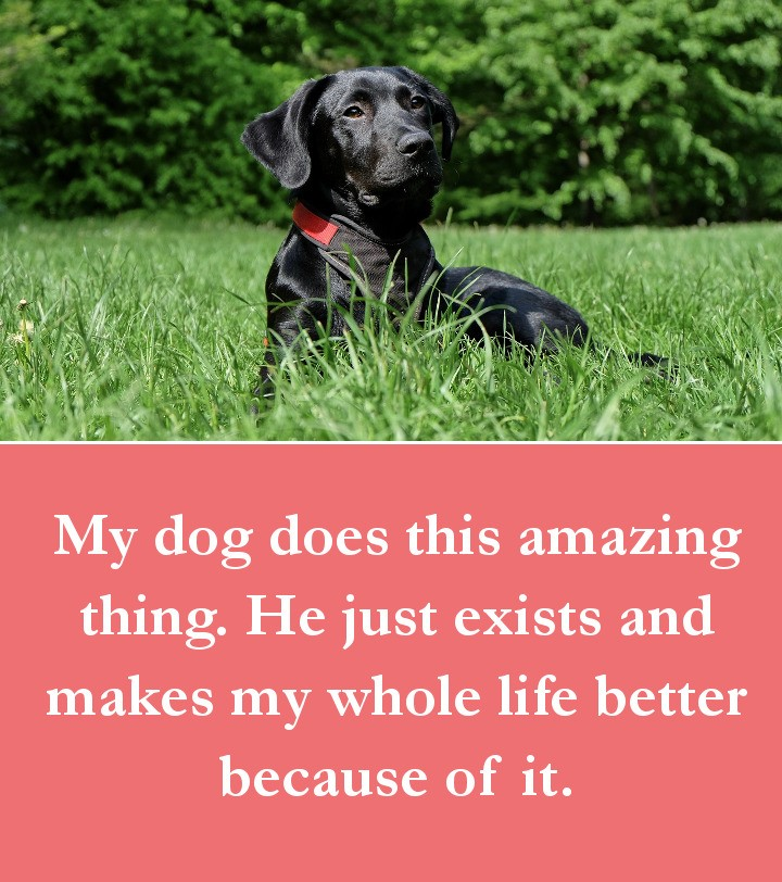 Dog Quotes - My dog does this amazing thing. He just exists and makes my whole life better because of it.