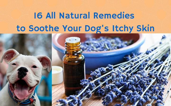 Remedies To Soothe Your Dogs Skin