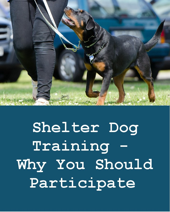 Shelter Dog Training - Why You Should Participate