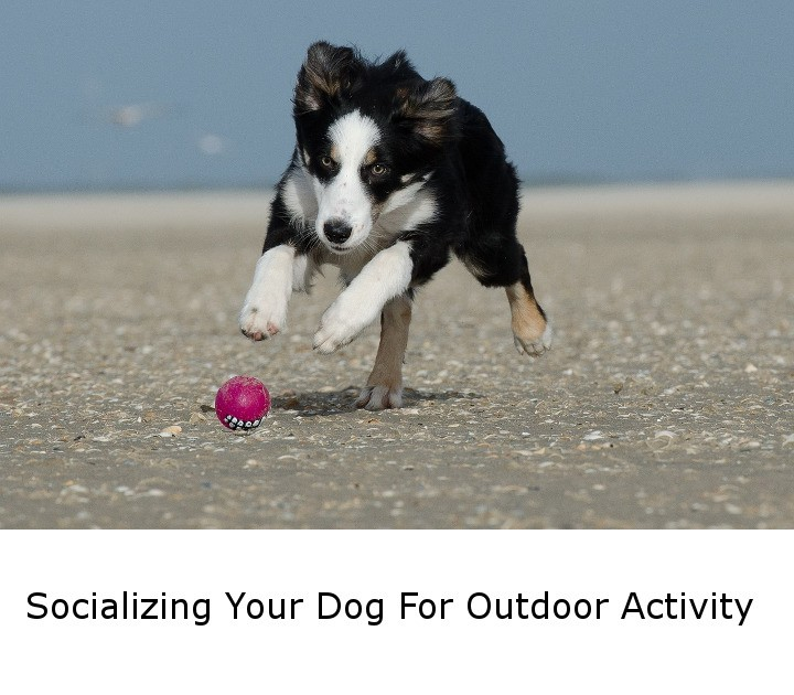 Socializing Your Dog For Outdoor Activity