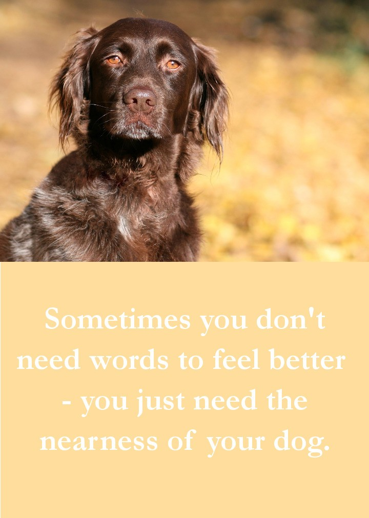 Dog Quotes - Sometimes you don't need words to feel better  - you just need the nearness of your dog.