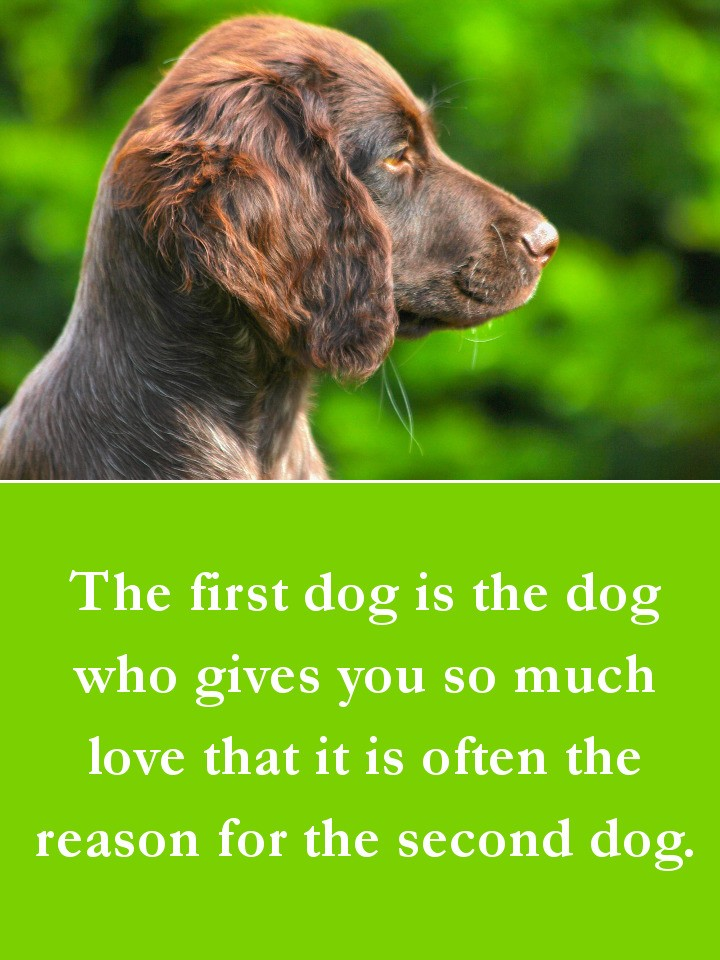 Dog Quotes - The first dog is the dog who gives you so much love that it is often the reason for the second dog