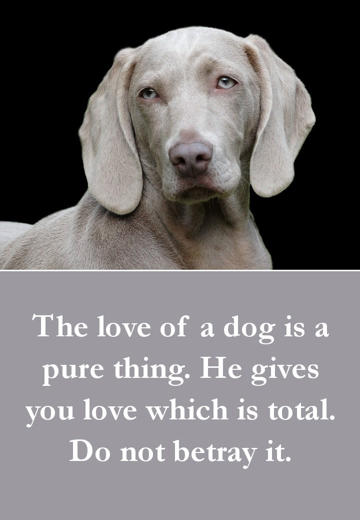 Dog Quotes - The love of a dog is a pure thing. He gives you love which is total. Do not betray it.