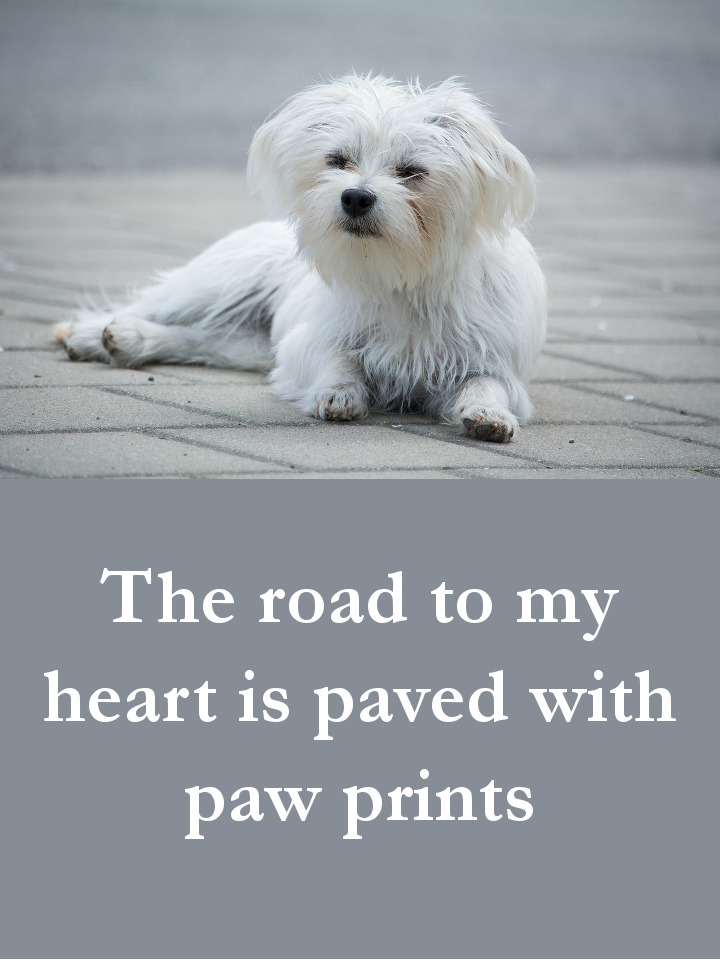 Dog Quotes - The road to my heart is paved with paw prints