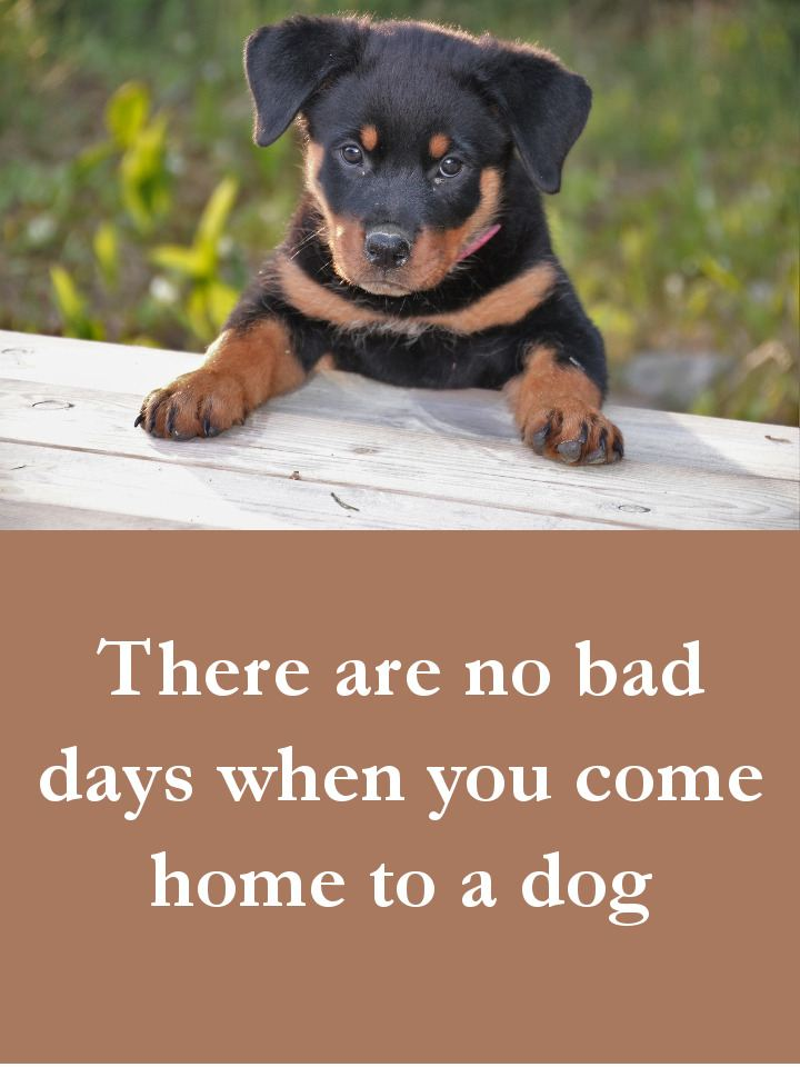 Dog Quotes - There are no bad days when you come home to a dog