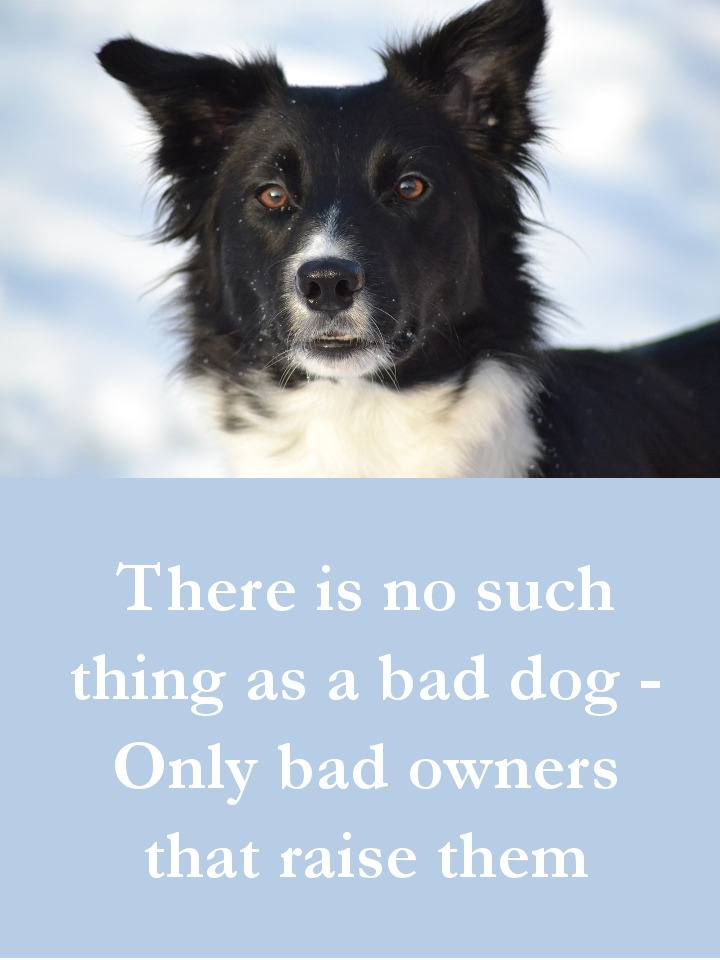 Dog Quotes - There is no such thing as a bad dog - Only bad owners that raise them