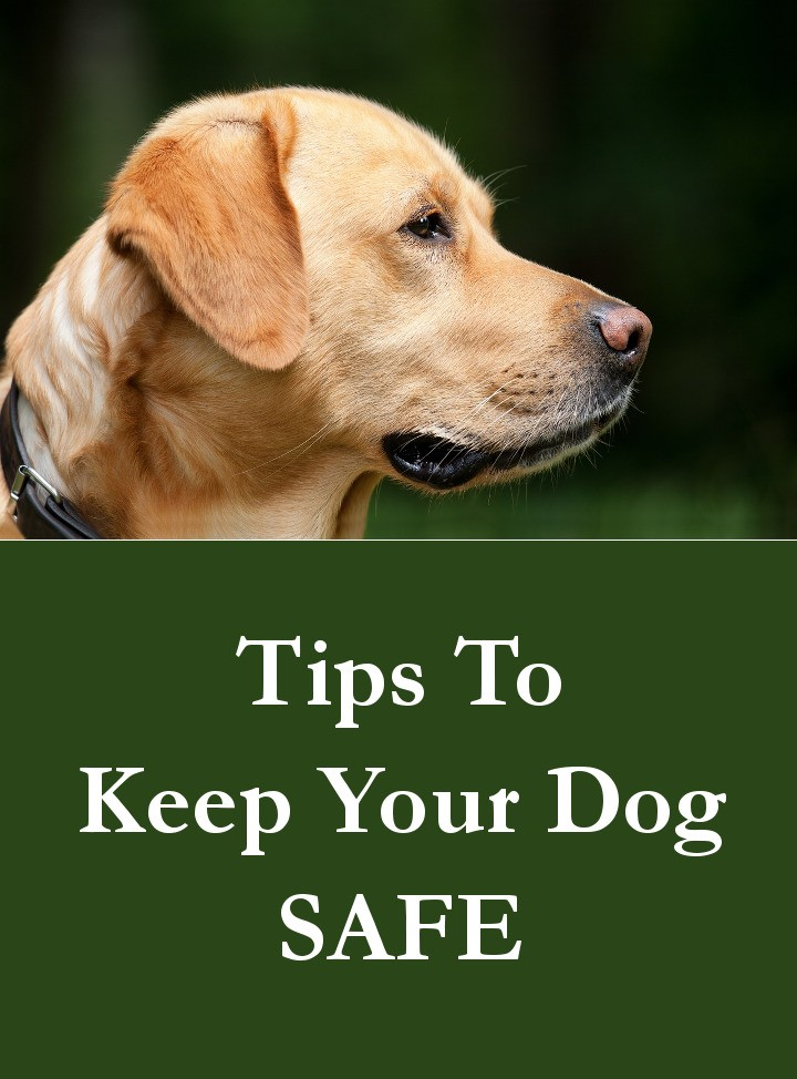 Tips To Keep Your Dog Safe