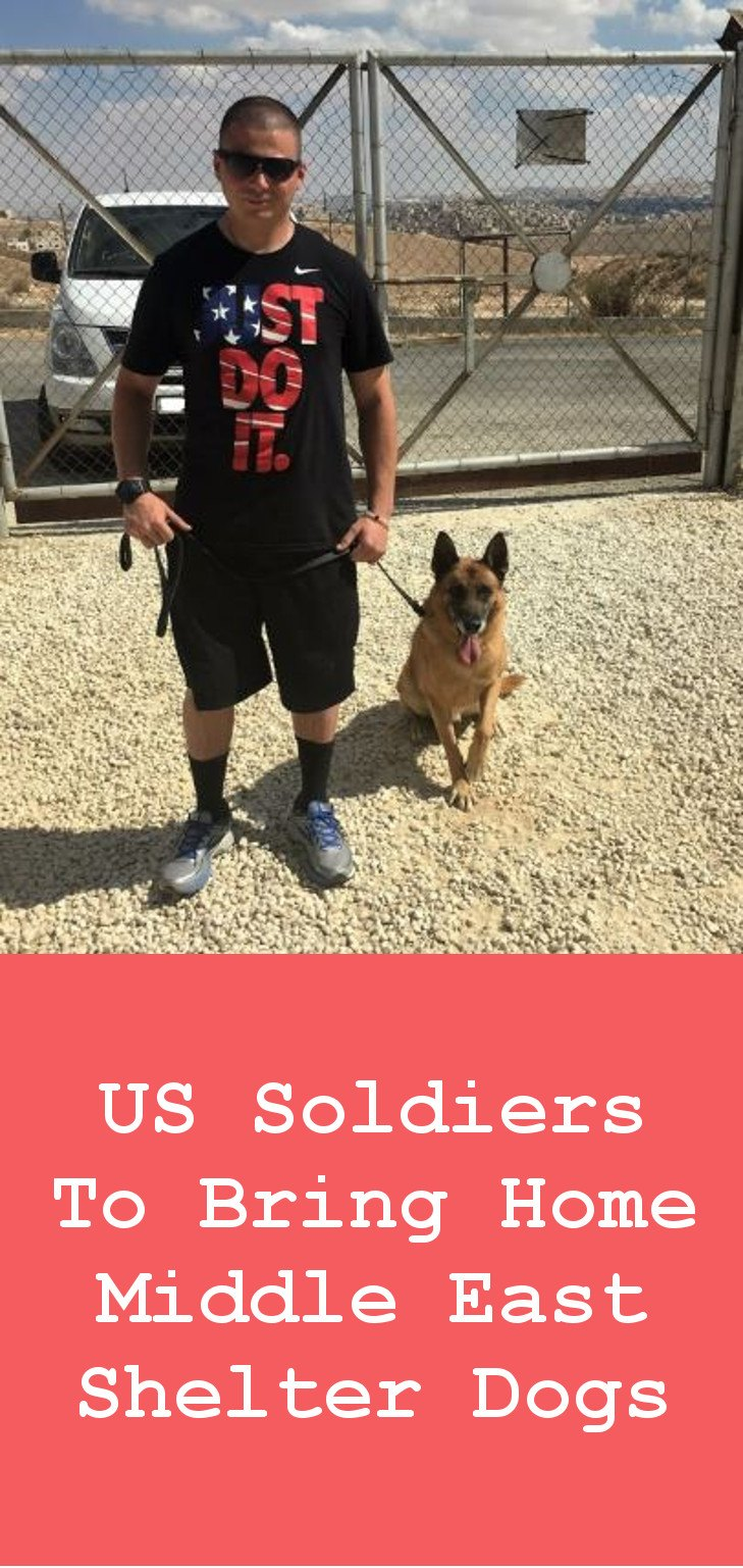 Shelter Dogs - US Soldiers To Bring Them Home