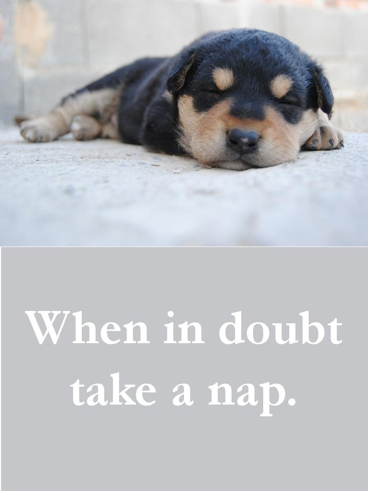 Dog Quotes - When in doubt take a nap.