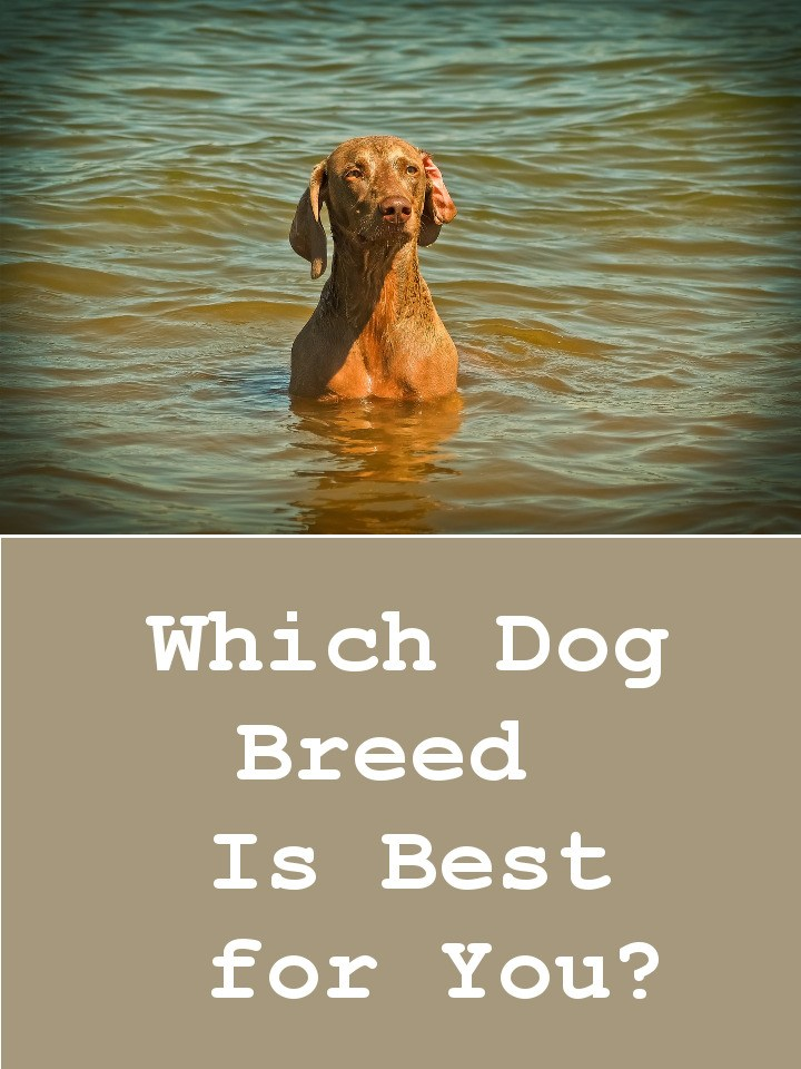 Find Out Which Dog Breed Is Best for You