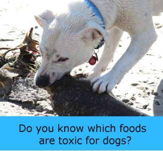 Toxic For Dogs - Lots Of The Foods We Eat Are Dangerous For Dogs