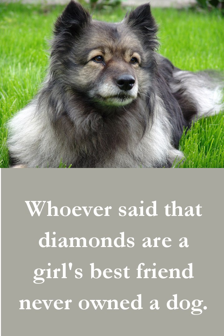 Dog Quotes - Whoever said that diamonds are a girl's best friend never owned a dog.