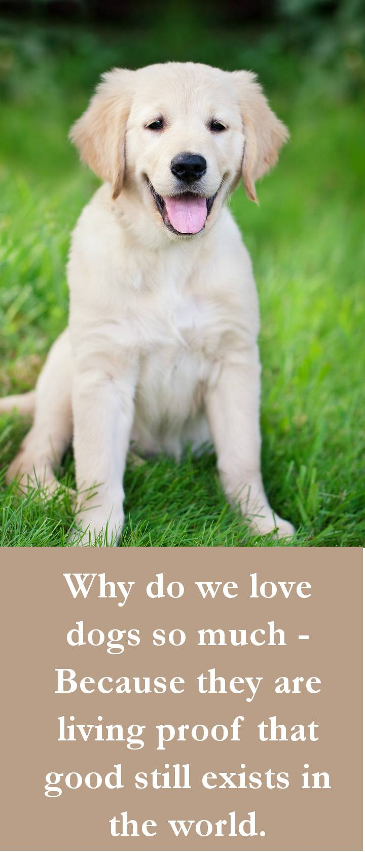 Why do we love dogs so much - Because they are living proof tDog Quotes - Why do we love dogs so much - Because they are living proof that good still exists in the world.hat good still exists in the world.
