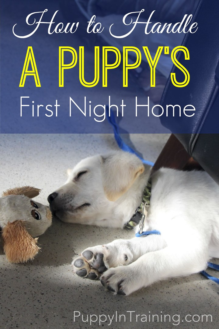 How to Handle A Puppy's First Night At Home