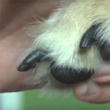 Trim Your Dogs Nails
