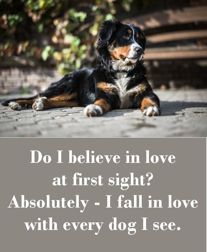 Do I believe in love at first sight? Absolutely - I fall in love with every dog I see.