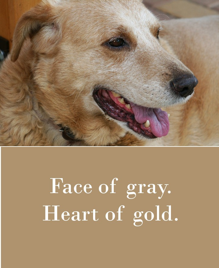 Face of gray. Heart of gold.