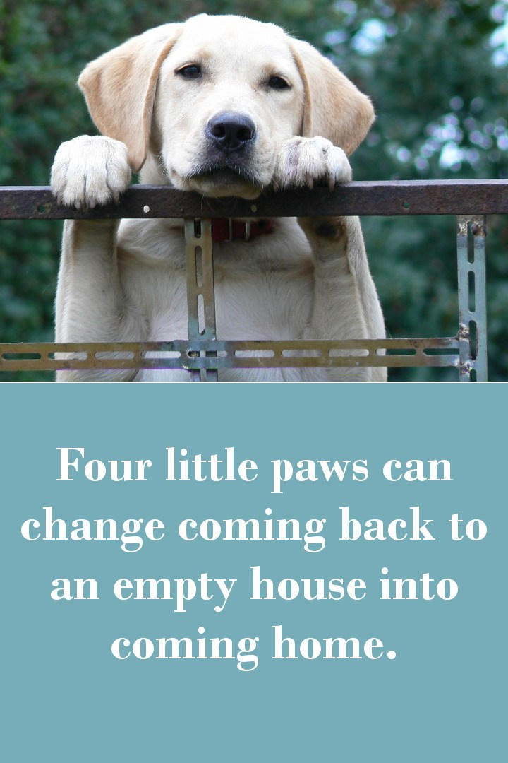 Four little paws can change coming back to an empty house into coming home.