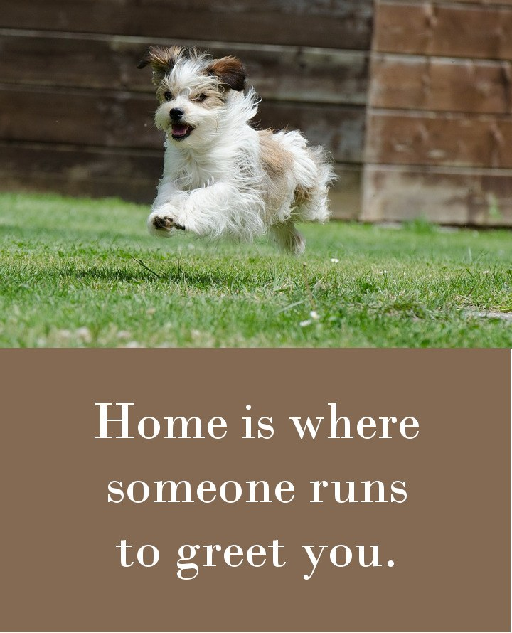 Home is where someone runs to greet you.