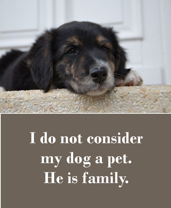 I don't consider my dog a pet. He is family.