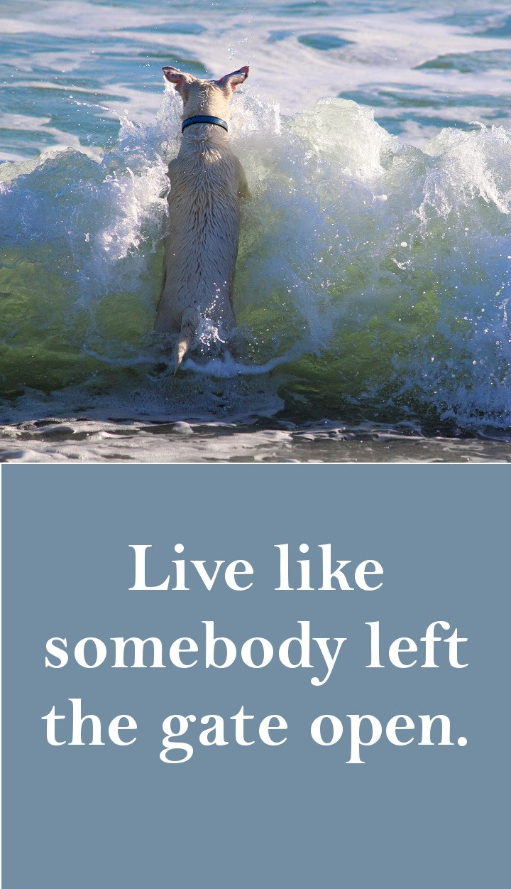 Live life like somebody left the gate open.