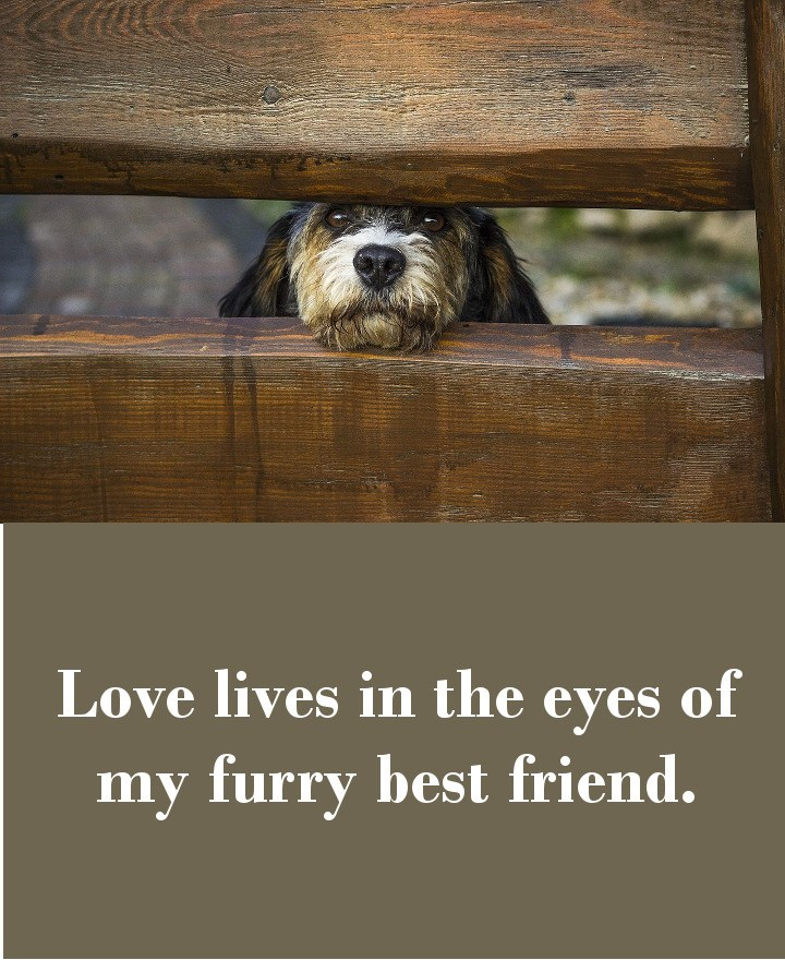 Love lives in the eyes of my furry best friend.