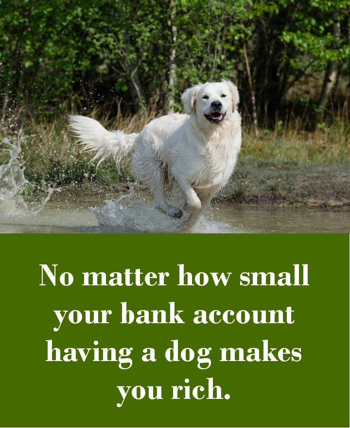 No matter how small your bank account - having a dog makes you rich.